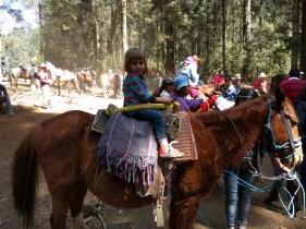 Los caballos imprescindibles para subir